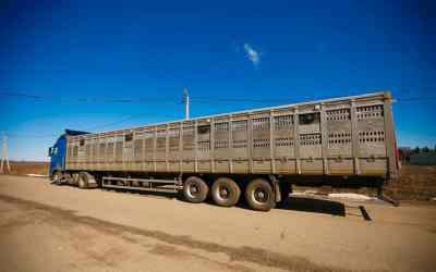 Перевозка скота по РФ и снг (крс, мрс, лошади) - Йошкар-Ола, цены, предложения специалистов