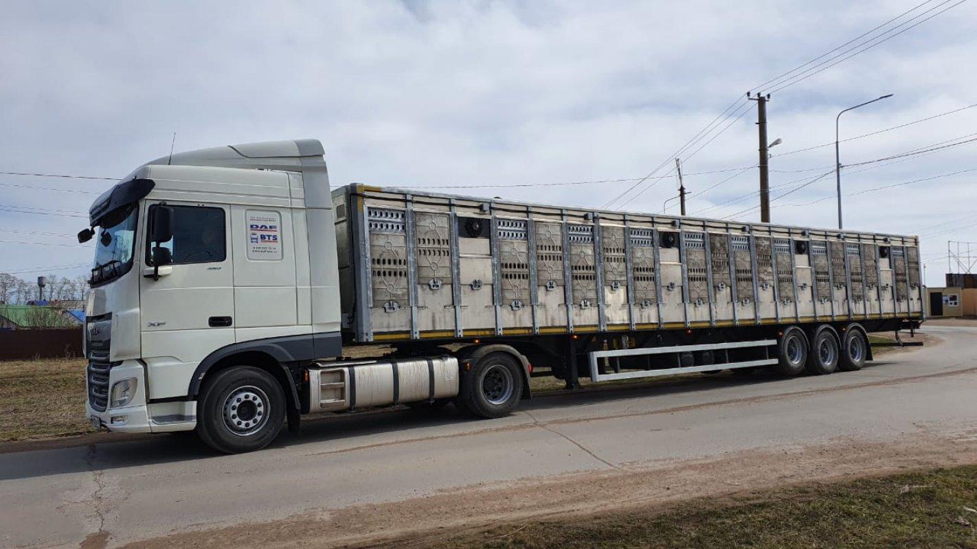 Перевозка животных и скота 8-965-920-08-80 - Йошкар-Ола, цены, предложения специалистов